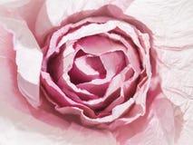 Concept d'amour de Rose Flower Bloom Paper Craft Photo libre de droits