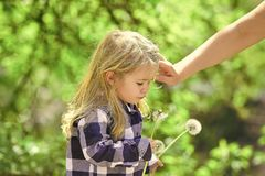 Concept d'amour et de confiance Pissenlit de coup de bébé et cheveux rangés d'enfant de main femelle Photographie stock