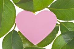 Concept d'amour et de nature Image stock