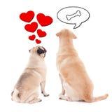 Concept d'amour et de relations - deux chiens mignons au-dessus de blanc Photo stock