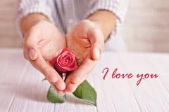 Concept d'amour L'homme tenant l'orange s'est levé dans des mains en forme de coeur Carte postale du ` s de Valentine Photo libre de droits
