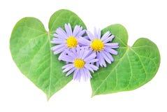 Concept d'amour : paires de coeurs des feuilles et de la fleur Photo stock