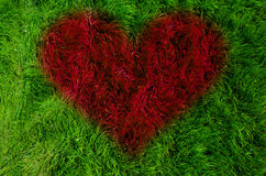 Concept d'amour sur l'herbe verte Photographie stock