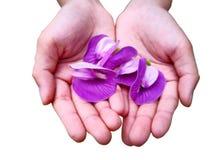 Concept d'amour Une petite main d'un enfant tient le flo de quatre pourpres photos libres de droits