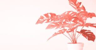 Concept d'art de bruit, feuilles de corail d'usine photographie stock