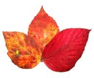 Concept d'automne Photographie stock libre de droits