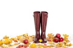 Concept d'automne Vin de Marsala de couleur de bottes en caoutchouc Feuilles d'automne et AP Photographie stock