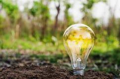 Concept d'Eco - ampoule sur la nature de saleté Images stock
