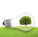 Concept d'Eco, arbre vert s'élevant dans une ampoule Photographie stock libre de droits
