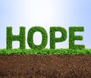 Concept d'espoir de croissance d'herbe Images libres de droits
