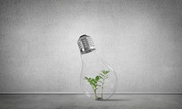 Concept d'innovations d'Eco à l'aide d'ampoule Photo stock
