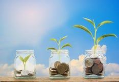 Concept d'investissement Usine de croissance sur des pièces de monnaie en trois étapes dans le gl clair Image stock