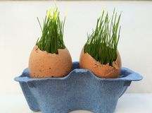 Concept d'oeufs de pâques avec l'herbe verte à l'intérieur des coquilles d'oeuf Photographie stock