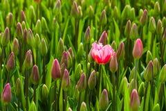 Concept d'originalité sur le lit de fleur Photos libres de droits