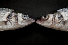 Concept de baiser de bar de la mer deux Image stock