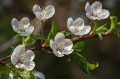Concept de beau fond de ressort de nature Saisons, faisant du jardinage, fleurs admiratives Photos libres de droits