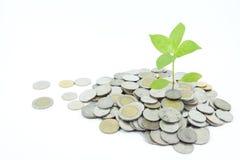 Concept de bedrijfsgroei Royalty-vrije Stock Fotografie