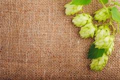 Concept de brassage Ingrédients pour la production de bière Photographie stock libre de droits