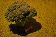 Concept de broccoli Photographie stock