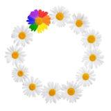 Concept de cadre de camomille de concept de camomille avec le symbo gai de culture Images libres de droits