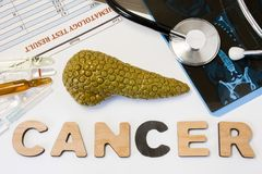 Concept de cancer de pancréas La forme anatomique du pancréas se trouve près des lettres composant le cancer de mot entouré par l Photo stock