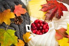 Concept de chute avec les vêtements et les canneberges chauds avec le congé d'automne Photo libre de droits