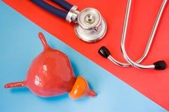 Concept de construction de diagnostic et maladies de détection d'organe d'appareil urinaire - vessie et prostate Stéthoscope et m images libres de droits