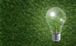 Concept de croissance d'affaires, écologie Photographie stock libre de droits
