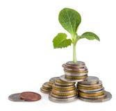 Concept de croissance ou d'écologie d'argent Photographie stock libre de droits