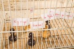 Concept de droits civiques Photos libres de droits