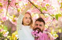 Concept de fille de loisirs Le père et la fille sur les visages heureux étreint, fond de Sakura Enfant et homme avec le rose tend Image libre de droits