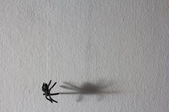Concept de fond de Halloween Ombre graphique d'araign?e noire accrochant sur le Web sur le mur blanc photo stock