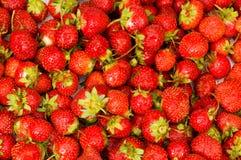 Concept de fruit - fraises rouges images libres de droits