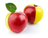 Concept de fruit rouge et jaune de pomme avec le vert Photographie stock libre de droits