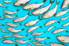 Concept de fruits de mer Photographie stock libre de droits