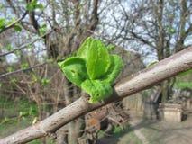 Concept de geboorte Nieuw gebladerte De lente Royalty-vrije Stock Foto's