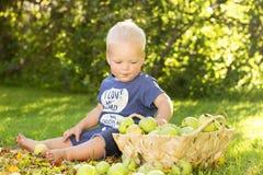 Concept de herfst De leuke zitting van de babyjongen onder gele bladeren en groene appelen Idee voor de advertentie van het Oogst royalty-vrije stock afbeelding