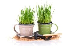 Concept de jardinage Photos libres de droits