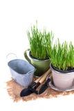 Concept de jardinage Photo libre de droits