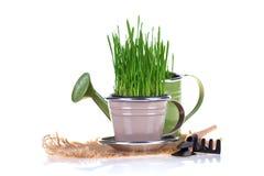 Concept de jardinage Photographie stock