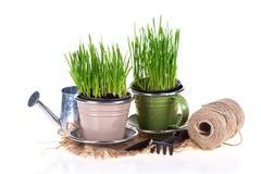 Concept de jardinage Images libres de droits