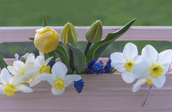 Concept de jardinage et de ressort Photo stock