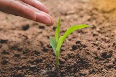 Concept de jeune plante par la main humaine arrosant le jeune arbre Photo libre de droits