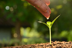 Concept de jeune plante par la main humaine arrosant le jeune arbre au-dessus du Ba vert Photographie stock