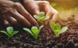 Concept de jeune plante par la main humaine, graine de ensemencement humaine Images libres de droits