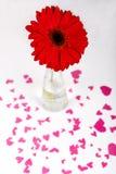 Concept de jour de valentines de saint Forme rouge de coeur Fleur rouge de Gerbera dans un vase Backround blanc Foyer sélectif Photographie stock