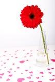 Concept de jour de valentines de saint Forme rouge de coeur Fleur rouge de Gerbera dans un vase Backround blanc Foyer sélectif Photo libre de droits