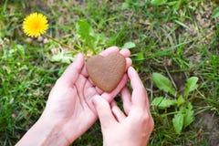 Concept de jour du ` s d'amour et de Valentine main masculine dans la forme du coeur sur le fond de champ d'herbe verte photo libre de droits