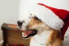 Concept de Joyeux Noël Chien mignon dans le chapeau de Santa avec l'oeil adorable photographie stock libre de droits