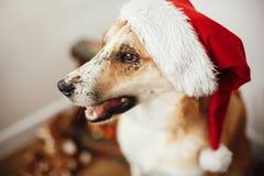 Concept de Joyeux Noël Chien mignon dans le chapeau de Santa avec l'oeil adorable photo libre de droits